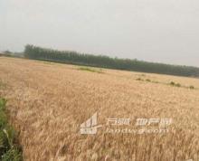 南京江宁区土桥镇平坦水田200余亩