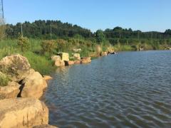 【第一次拍卖】镇江山水湾生态农业开发有限公司名下的林地使用权和林木所有权以及其它地面附着物