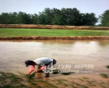 (出租) 来安县水口镇 土地 105000平米