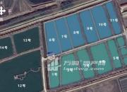 (出租)曹集文化站东2公里 养鱼池塘 130亩