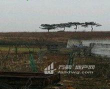 南京市六合区100亩水浇地