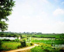 合肥市长丰县1200亩优质林地、 苗圃 、鱼塘虾场