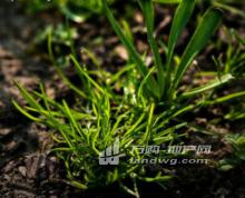 南京市六合区200亩土地(含70亩水塘)