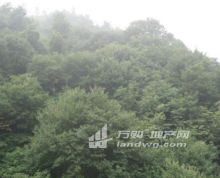 安徽六安舒城县306亩林地出售