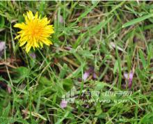 无锡市锡山300亩花卉基地