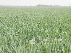 徐州市铜山区500亩旱地