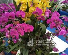 (出租) 湖熟耀华社区337省道旁独院场地18亩出租出售