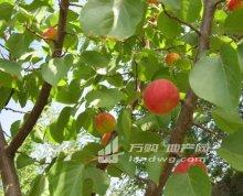滁州市定远县永康镇500亩林地