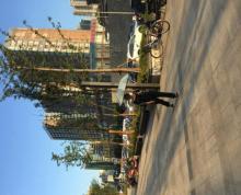(转让) 北塘区凤凰城798街区盈利中奶茶店诚心急转