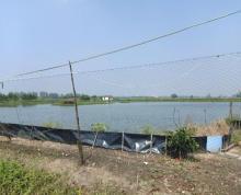 (出租)竹泓镇大周公路旁26亩蟹塘对外出租