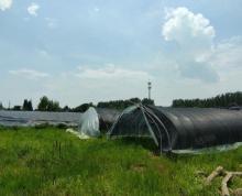 (出租)(51旺铺推荐)出租青阳25亩养殖场,有现成的水塘和住房