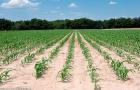 今年江苏将有70万亩耕地轮作休耕