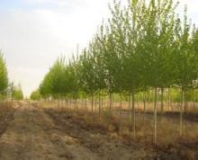 南通通州市1000亩林地