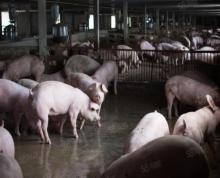 (出租)养猪场国道旁靠近湖熟大型综合土地可以简易建房
