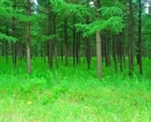宿城区埠子镇352亩园林苗圃