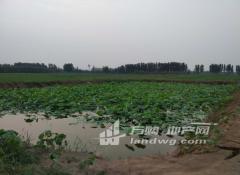济南市济阳县孙耿镇50亩家庭农场
