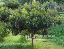 南京市江宁区65亩林地和鱼塘