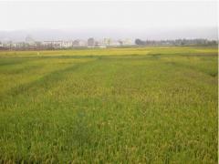 连云港赣榆区沙河镇200亩耕地