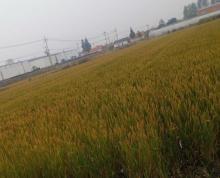 (出租)农产品加工区 可以食品生产加工,可以 仓储 系列