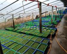 (出租)适合农产品加工、废品收购、炒货、