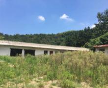 (出租) 572朱门社区出租厂地6亩有房子
