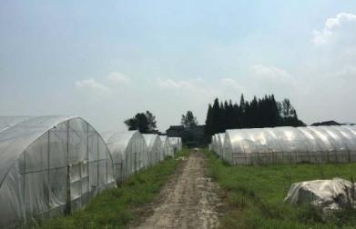 南京江宁区朱门附近166亩精品生态农庄