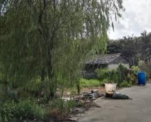 (出租)大义果树鱼塘共20亩出租