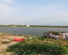 (转让)龙虾藕塘养殖,可以改为稻田龙虾养殖