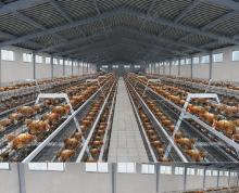 (出租)大型养鸡场转让出租国道边老山脚下