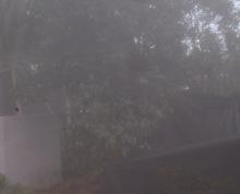江苏南京溧水区东屏镇丽山400亩林地 — 其他林地转让