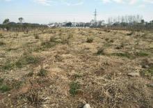 (出租)湖熟 337省道边 交通便利基本硬化土地 20000平米