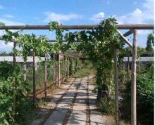 苏州市吴江区20亩家庭农场