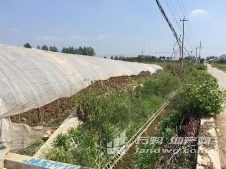 南京浦口区星甸街道300亩茶场和50亩大棚