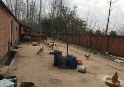 南京市六合区竹镇60亩农场