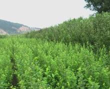 合肥肥东县店埠镇120亩耕地