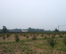 合肥市肥东县张集乡300亩林地