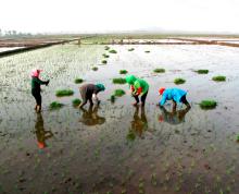 南通市如皋市开发区1000亩水田(有建设用地指标)