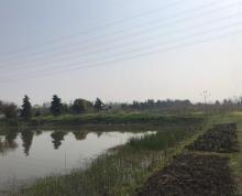 (出租)出租盘城80亩鱼塘水面
