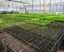 (出租)园艺花木市场可以放大棚独门独院多种用途