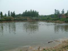 泰州市海陵区城北600亩养殖种植土地