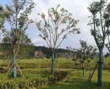 南京仙林片区50亩科研用地出让
