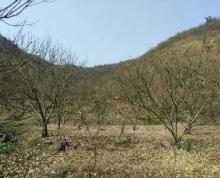 安徽宣城宁国市594亩山林地