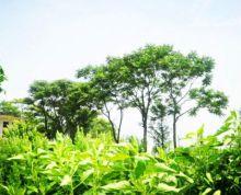 安徽合肥长丰县1200亩优质林地、苗圃、鱼塘虾场转让