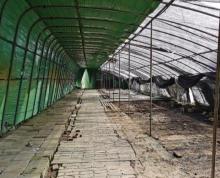 (出租)种植和养殖大棚,地理位置优越!