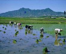 合肥市长丰县造甲乡800亩水田地